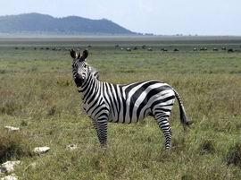 African Safari_007